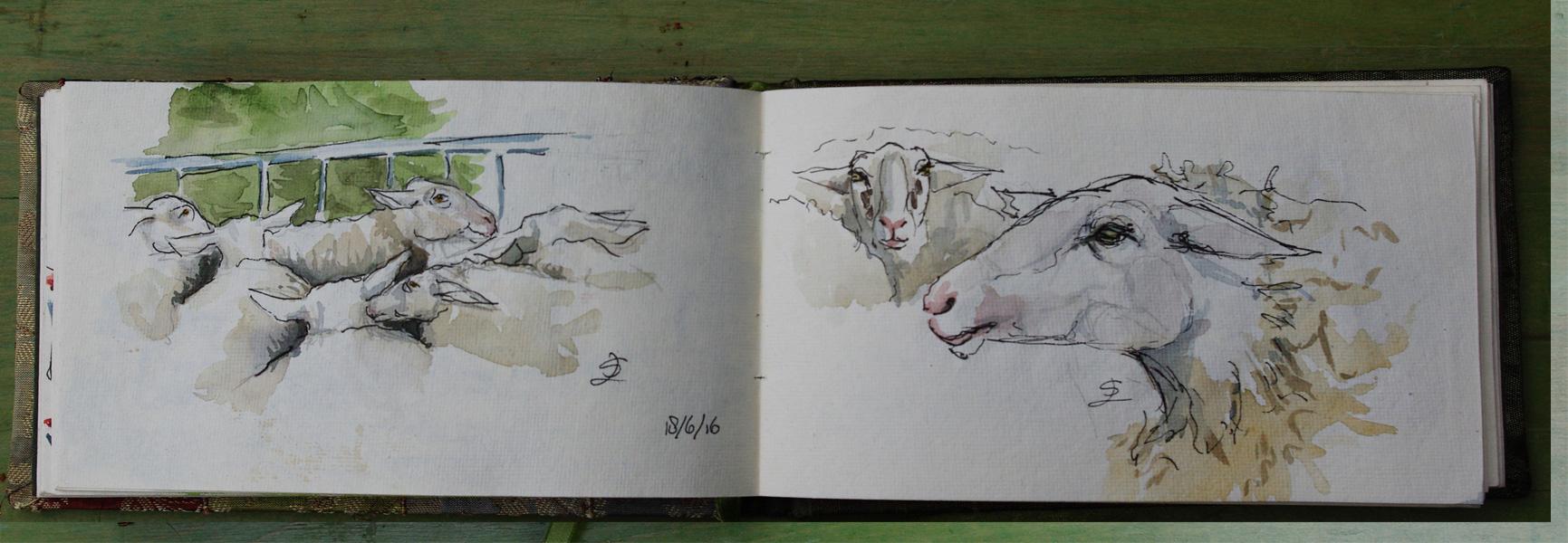 schaapscheerdersfeest  Rheden de schapen wachten hun beurt af