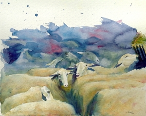 Schapen-wachtend-op-het-scheren, aquarel 40x50